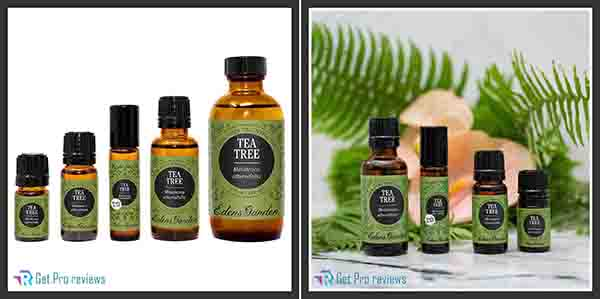 Eden's Garden Tea Tree
